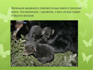 Маленькие медвежата появляются еще зимой в трескучий мороз. Они маленькие, с ...