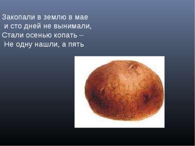Закопали в землю в мае и сто дней не вынимали, Стали осенью копать – Не одну ...