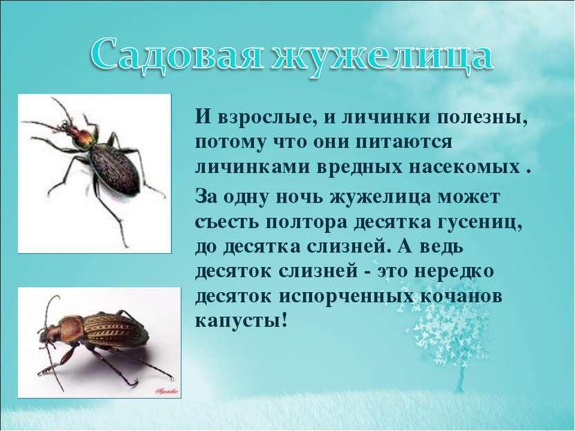 И взрослые, и личинки полезны, потому что они питаются личинками вредных насе...