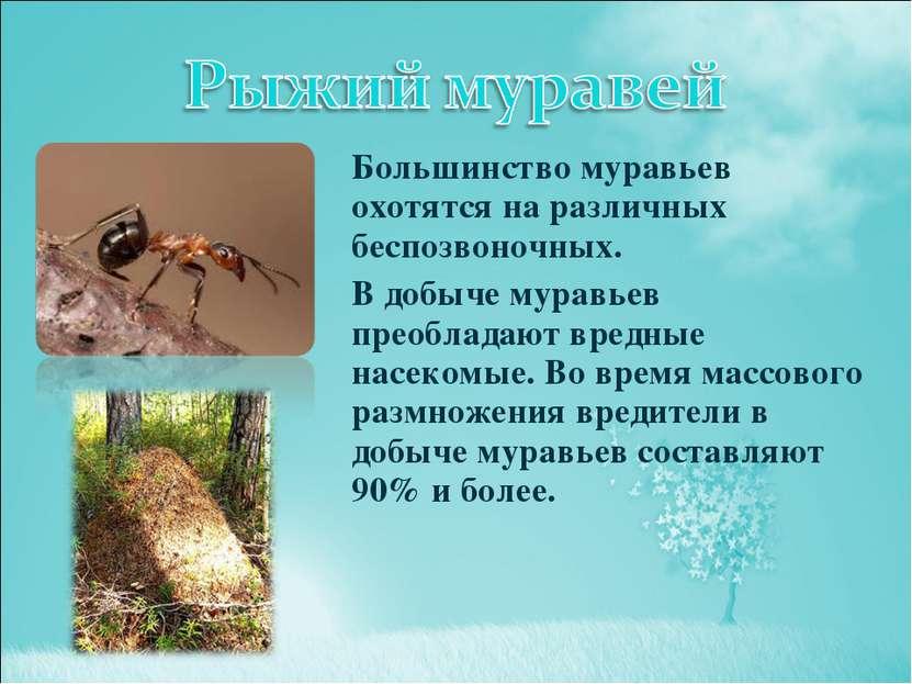 Большинство муравьев охотятся на различных беспозвоночных. В добыче муравьев ...