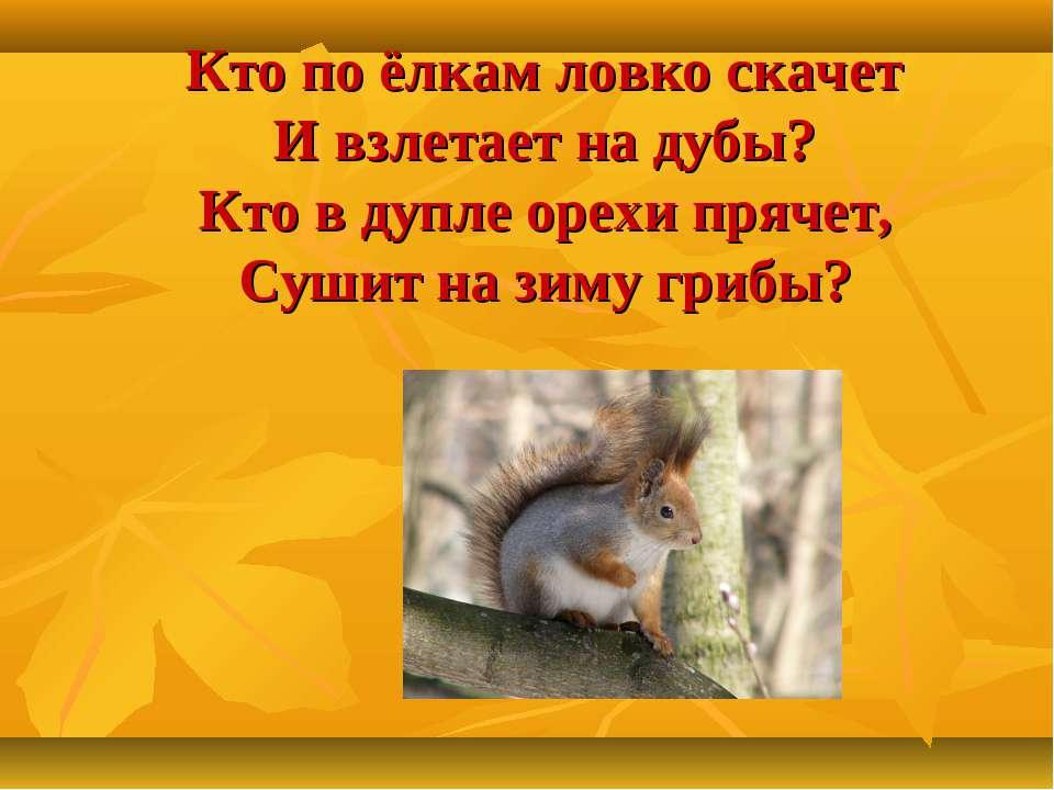 Кто по ёлкам ловко скачет И взлетает на дубы? Кто в дупле орехи прячет, Сушит...