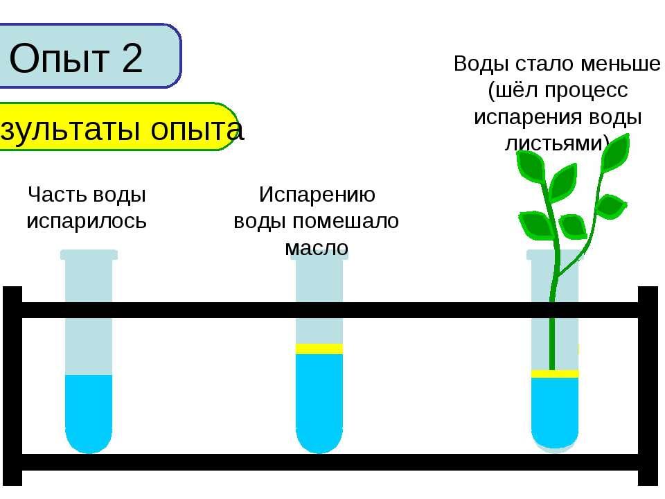 Опыт 2 Результаты опыта Часть воды испарилось Испарению воды помешало масло В...
