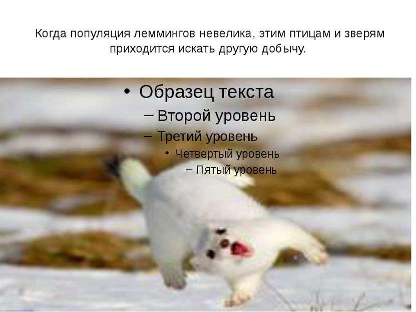 Когда популяция леммингов невелика, этим птицам и зверям приходится искать д...