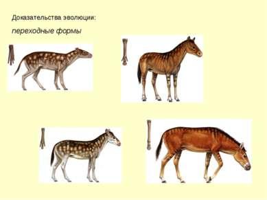Доказательства эволюции: переходные формы