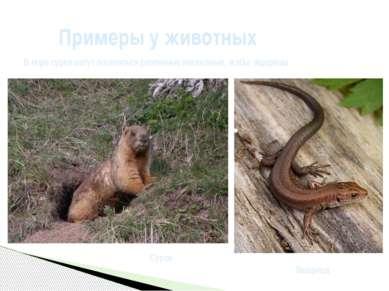 Примеры у животных В норесуркамогут поселяться различные насекомые, жабы, я...
