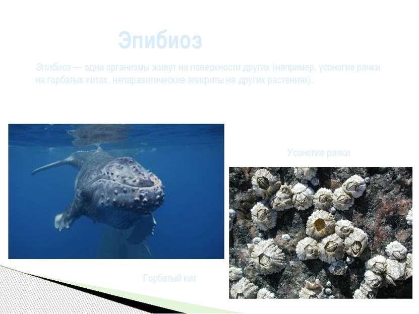 Эпибиоз Эпибиоз— одни организмы живут на поверхности других (например,усоно...