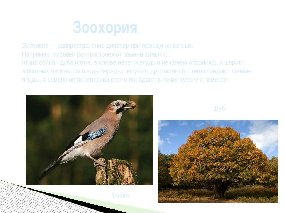 Зоохория Зоохория— распространениедиаспорпри помощи животных. Например, му...