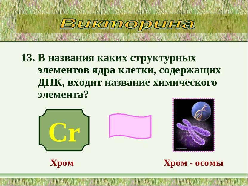 13. В названия каких структурных элементов ядра клетки, содержащих ДНК, входи...