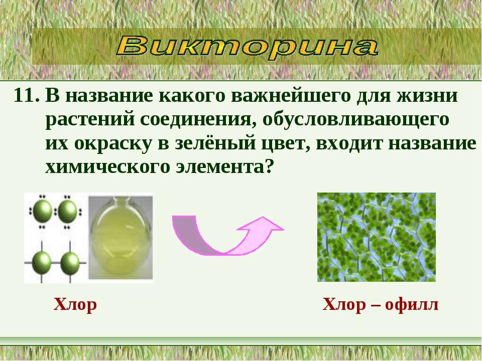 11. В название какого важнейшего для жизни растений соединения, обусловливающ...