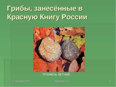* Яковлева Л.А. * Грибы, занесённые в Красную Книгу России ТРЮФЕЛЬ ЛЕТНИЙ Яко...