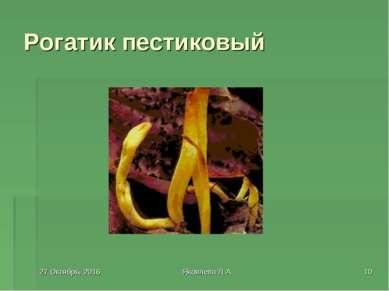 * Яковлева Л.А. * Рогатик пестиковый Яковлева Л.А.
