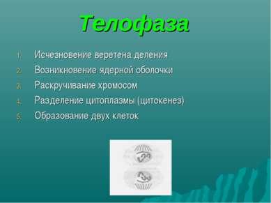 Телофаза Исчезновение веретена деления Возникновение ядерной оболочки Раскруч...
