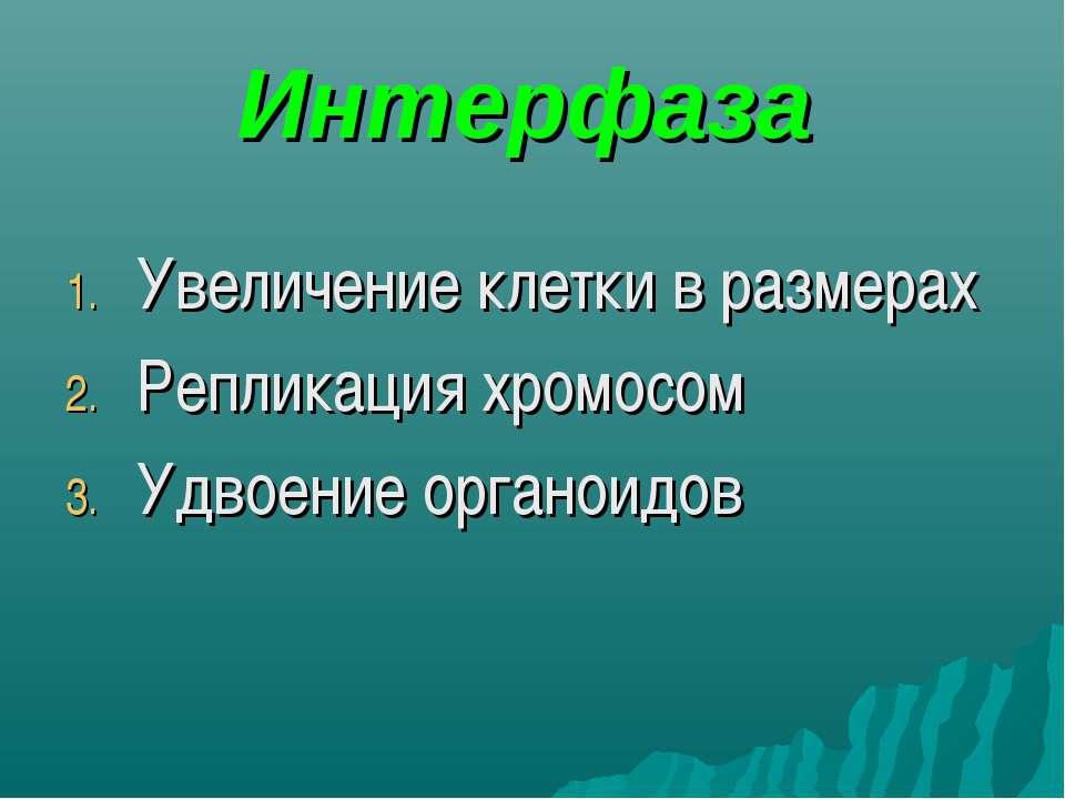 Интерфаза Увеличение клетки в размерах Репликация хромосом Удвоение органоидов