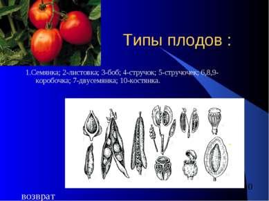 Типы плодов : 1.Семянка; 2-листовка; 3-боб; 4-стручок; 5-стручочек; 6,8,9-кор...