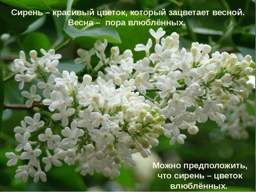 Сирень – красивый цветок, который зацветает весной. Весна – пора влюблённых. ...