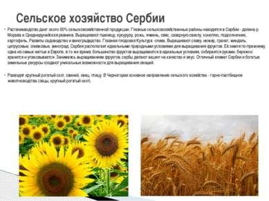 Растениеводство дает около 60% сельскохозяйственной продукции. Главные сельск...
