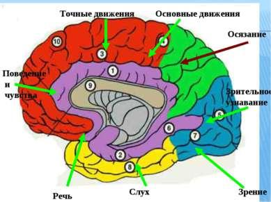 Осязание Зрительное узнавание Поведение и чувства Зрение Слух Речь Точные дви...