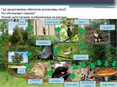 Где представлены обитатели экосистемы леса? Что обозначают стрелки? Назови це...