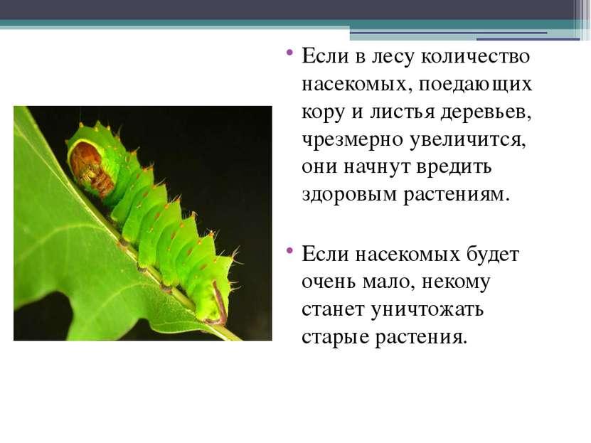 Если в лесу количество насекомых, поедающих кору и листья деревьев, чрезмерно...