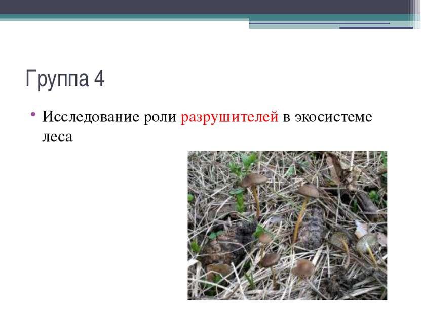 Группа 4 Исследование роли разрушителей в экосистеме леса