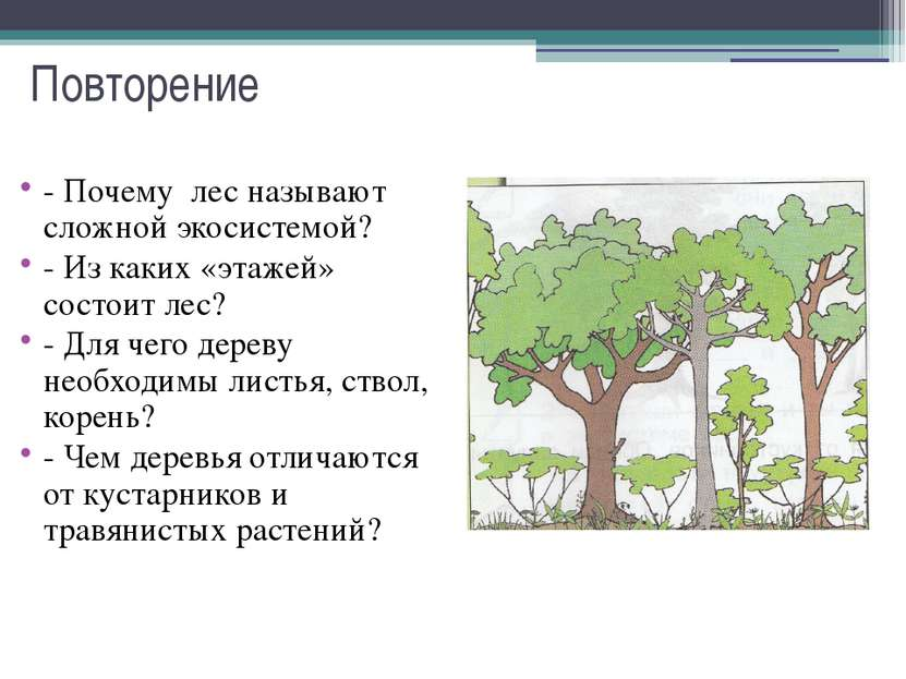 Повторение - Почему лес называют сложной экосистемой? - Из каких «этажей» сос...