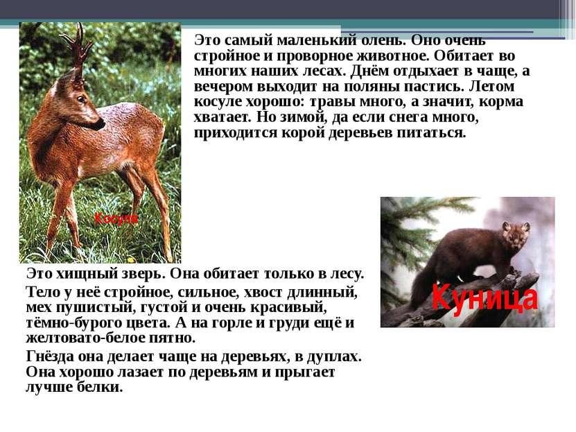 Косуля Это самый маленький олень. Оно очень стройное и проворное животное. Об...