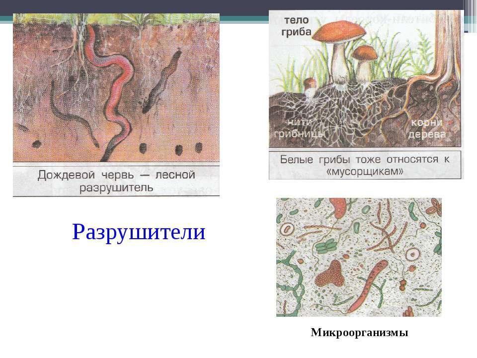 Микроорганизмы Разрушители