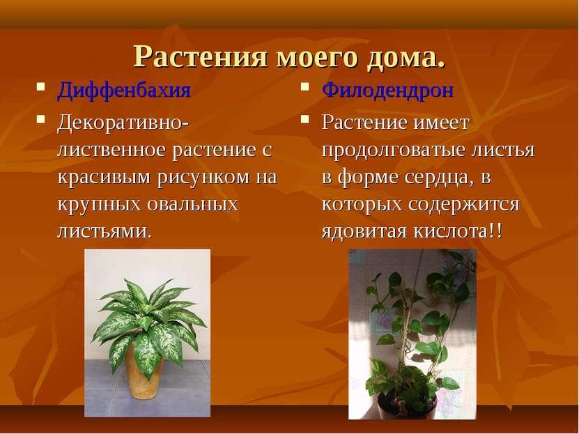 Растения моего дома. Диффенбахия Декоративно-лиственное растение с красивым р...