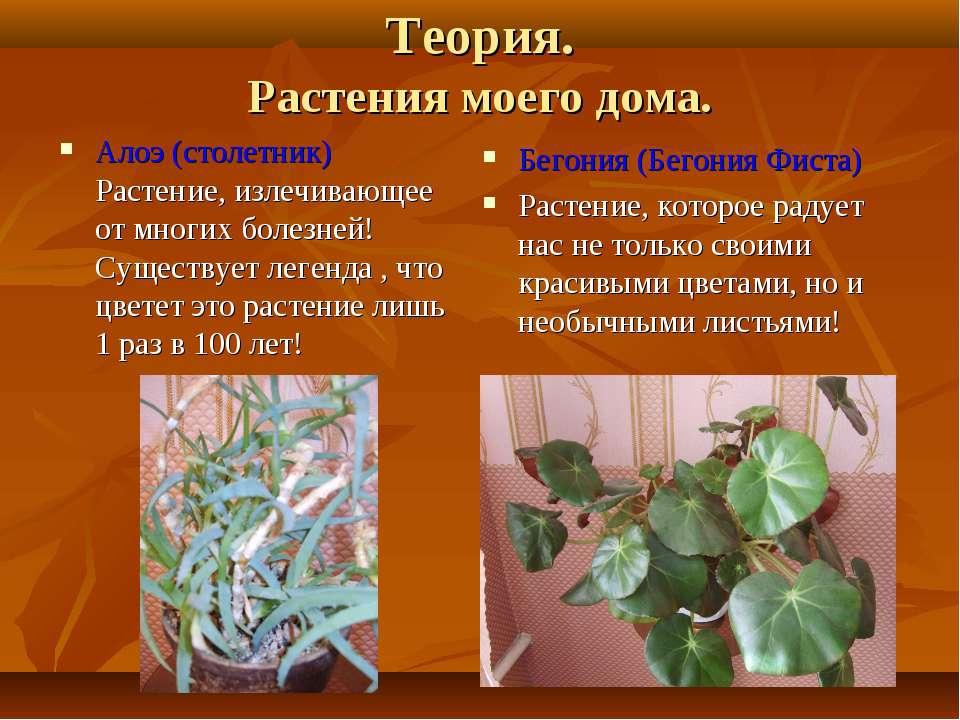 Теория. Растения моего дома. Алоэ (столетник) Растение, излечивающее от многи...