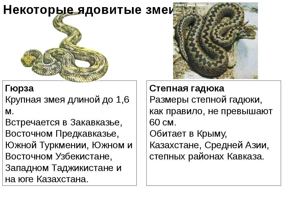 Гюрза Крупная змея длиной до 1,6 м. Встречается в Закавказье, Восточном Предк...