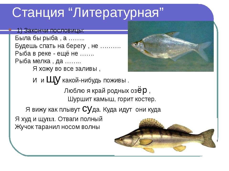 "Станция ""Литературная"" 1) Закончи пословицы: Была бы рыба , а …….. Будешь спа..."