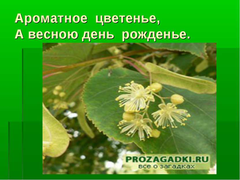Ароматное цветенье, А весною день рожденье.