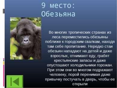 9 место: Обезьяна Во многих тропических странах из леса переместились обезьян...