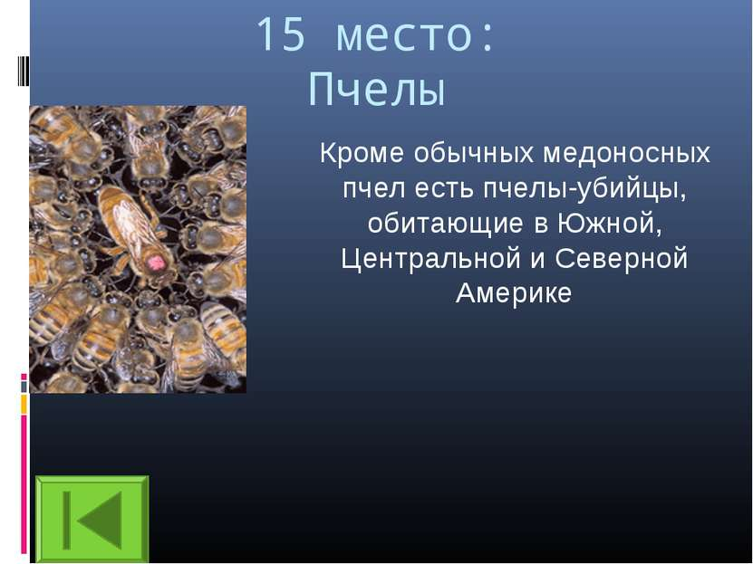 15 место: Пчелы Кроме обычных медоносных пчел есть пчелы-убийцы, обитающие в ...
