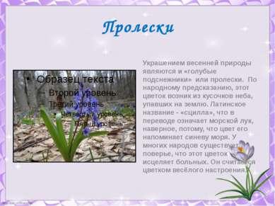 Пролески Украшением весенней природы являются и «голубые подснежники» или про...
