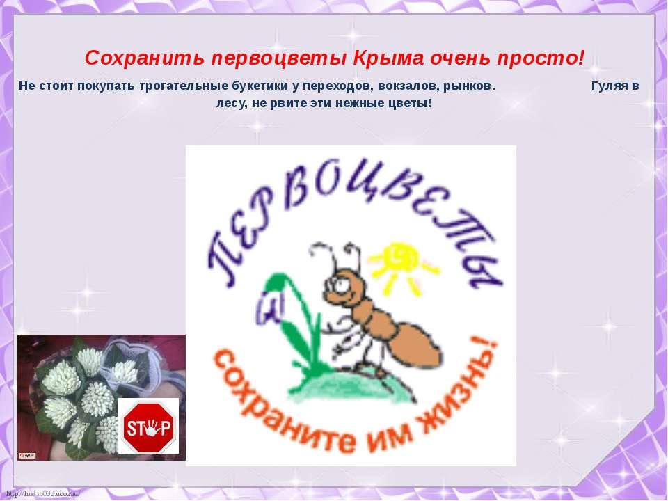 Сохранить первоцветы Крыма очень просто! Не стоит покупать трогательные букет...