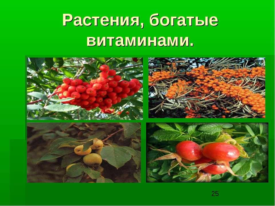 Растения, богатые витаминами.