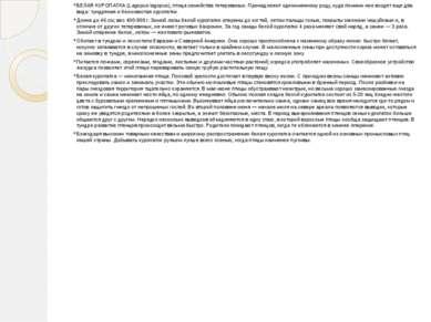 БЕЛАЯ КУРОПАТКА (Lagopus lagopus), птица семейства тетеревиных. Принадлежит о...