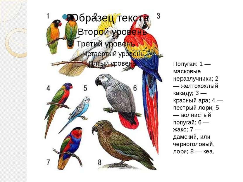 Попугаи: 1 — масковые неразлучники; 2 — желтохохлый какаду; 3 — красный ара; ...