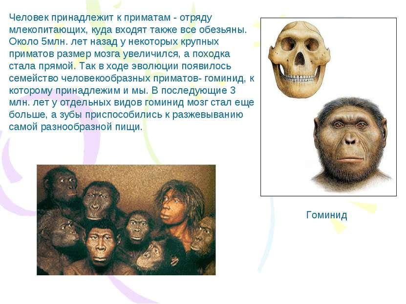 Картинки: древнейшие люди