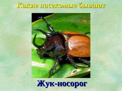 Какие насекомые бывают Жук-носорог