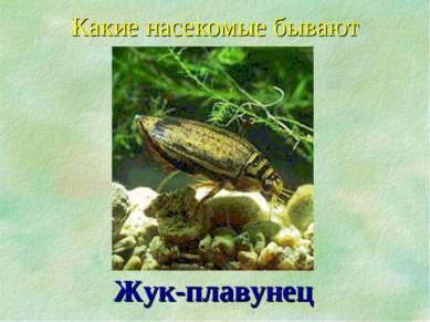 Какие насекомые бывают Жук-плавунец