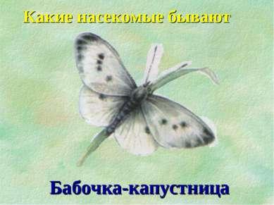 Какие насекомые бывают Бабочка-капустница