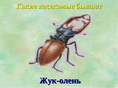 Какие насекомые бывают Жук-олень