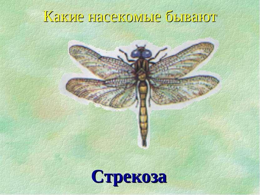Какие насекомые бывают Стрекоза