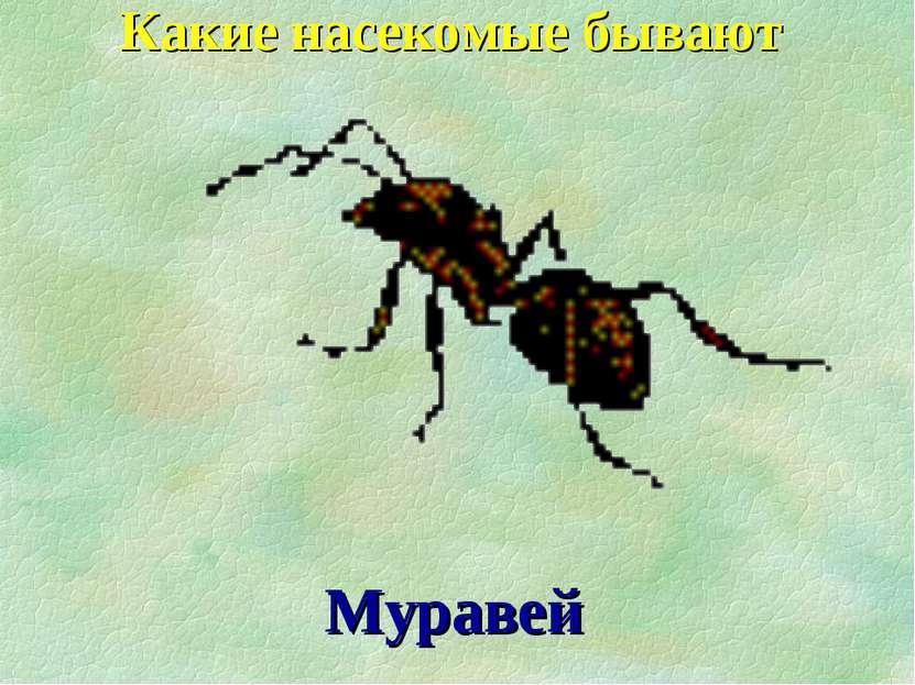 Какие насекомые бывают Муравей