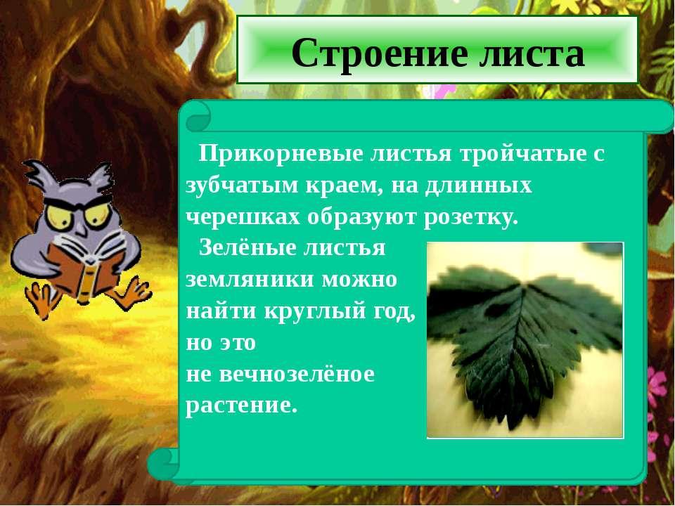 Строение листа Наземная часть состоит из прикорневых листьев и цветоносных то...