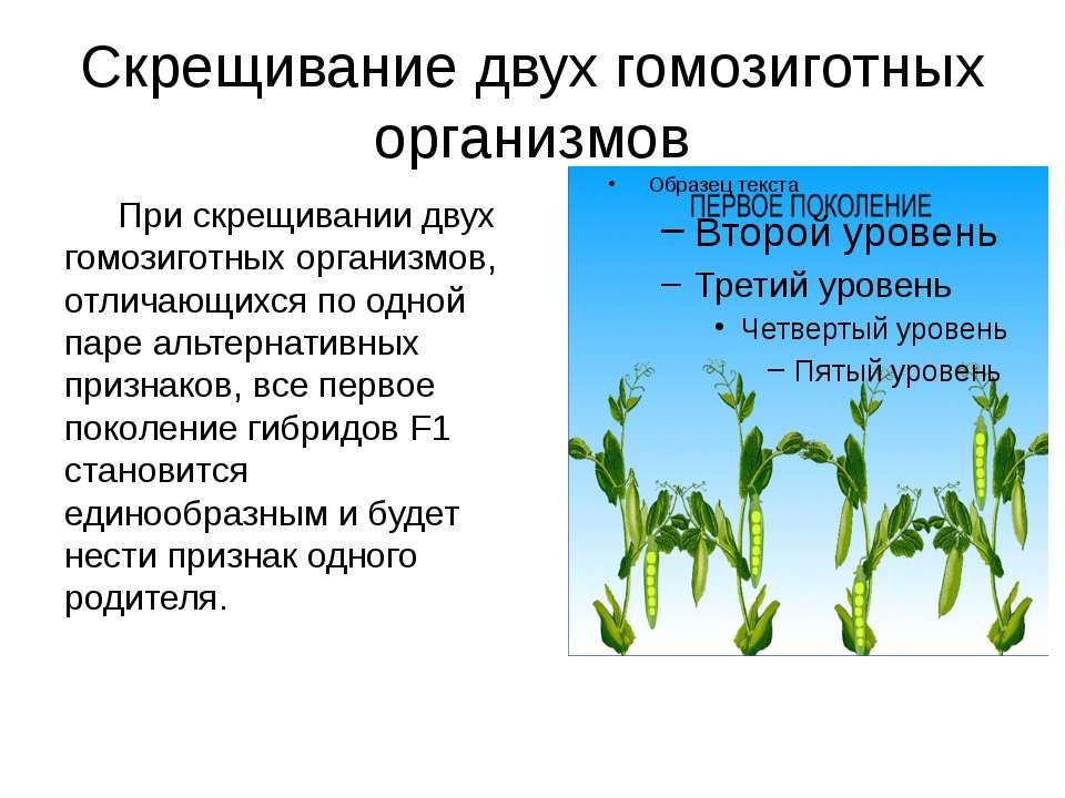 Скрещивание двух гомозиготных организмов При скрещивании двух гомозиготных ор...