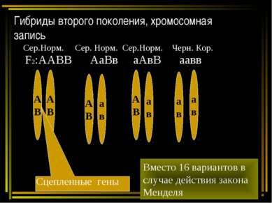 Гибриды второго поколения, хромосомная запись F2:ААВВ АаВв аАвВ аавв А В А В ...