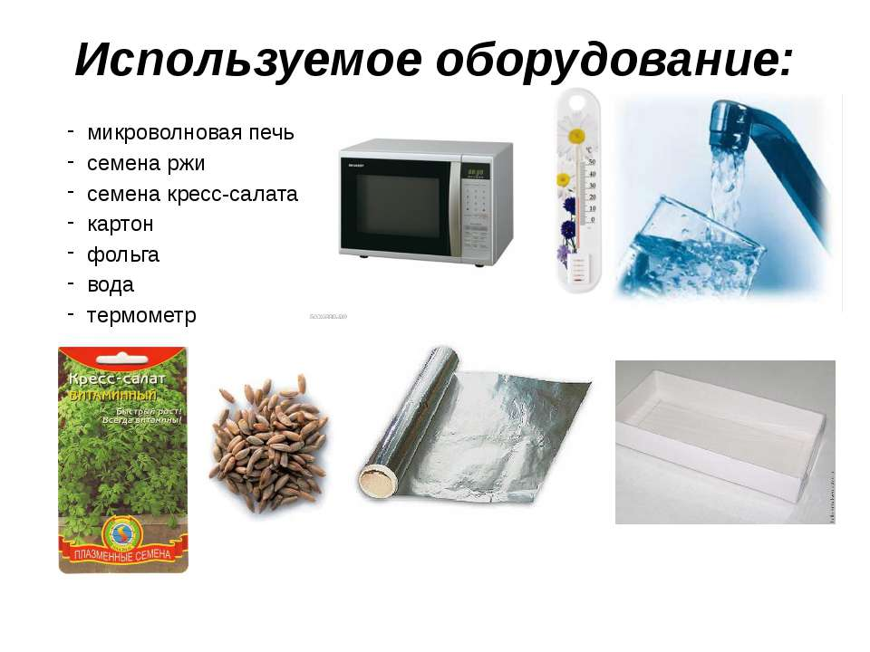 Используемое оборудование: микроволновая печь семена ржи семена кресс-салата ...